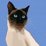 cat yasmin singer